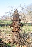Old rusty overgrown hydrant, in a field in Upstate New York royalty free stock image