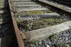 Old rusty rails, sleepers and flowers Stock Image
