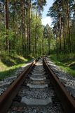 Old rusty railways in the evergreen forest, spring time royalty free stock photos