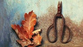 Old rusty scissors acorn leaves nobody hd footage