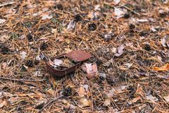 Old rusty tin can on the ground in a pine forest. The concept of environmental pollution royalty free stock photo