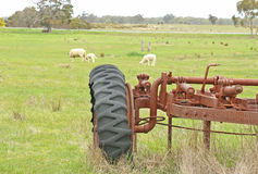 An old rusty tractor in a paddock with sheep grazing on grass Stock Images