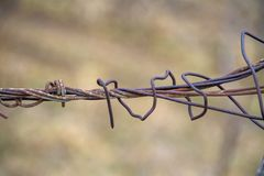 Old rusty barbed wire on fence royalty free stock images