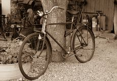 Old rusty vintage bike near big tree trunk. Rural areas. Sepia photo style stock photos