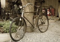Old rusty vintage bike near big tree trunk. Rural areas. Aged photo style stock photography