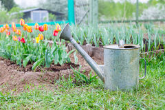 Old, rusty watering can standing on grass Stock Photos