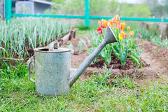 Old, rusty watering can standing on grass Stock Photo