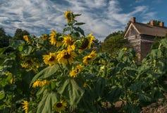 Old Salem. The gardens of Old Salem, North Carolina. Winston Salem places vacation Royalty Free Stock Photography