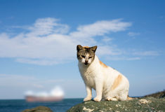 Old san Juan-stray cat Royalty Free Stock Photo