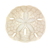 Old sand dollar. A single old sand dollar on a white background royalty free stock image