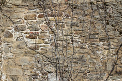 Old sandstone wall with a creeper growing on it. Old sandstone wall with natural rough rocks with a leafless creeper growing on it in a background texture and Stock Photos
