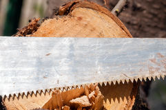 The old saw against the cut tree Royalty Free Stock Photos