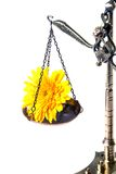 Old scales/balance with a flower. On a white background Royalty Free Stock Photos
