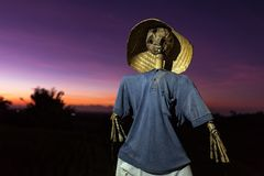 Old scarecrow with a sunrise sky. Old scarecrow with sunrise sky on background royalty free stock images
