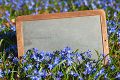 Old school board in a meadow of squill Royalty Free Stock Images