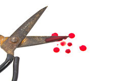 Old scissors and a drop of blood. Stock Photography