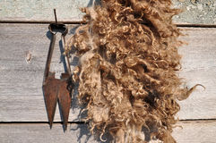 Old scissors to shear the sheep Royalty Free Stock Photos