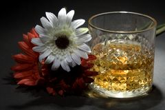 Old Scotch Whiskey Stock Photography