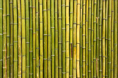 Old scratched green yellow bamboo fence background Royalty Free Stock Images