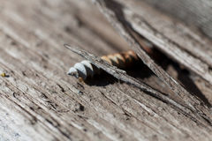 Old screw in wood Royalty Free Stock Photos