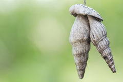 Old  sea shell hang mobile. Hanging outdoor Stock Photos