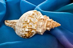 Old sea shell laying on blue silk Royalty Free Stock Images