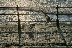 Old Seafront iron railings, View towards Scarborough. Weathered and Rusty railings and concrete steps stock photo