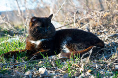 Old seasoned black cat Stock Photos