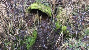 Old sewer pipe in nature