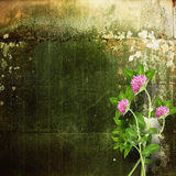 Old shabby cement wall with bouquet of delicate clover Royalty Free Stock Photo