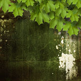 Old shabby cement wall with green branches Royalty Free Stock Photos