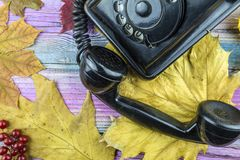 Old shabby phone is on the table among the yellow leaves. Autumn leaves and retro phone and a bunch of viburnum lies on colored wooden background royalty free stock image