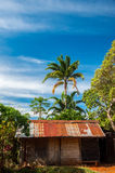 Old Shack. An old shack in the jungle Royalty Free Stock Photo