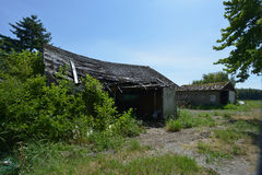 Old shack covered in bushes Stock Photo