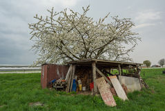 Old Shed And Apple Tree Royalty Free Stock Photo