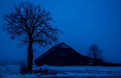 Old shed and bare tree. In winter blue night Royalty Free Stock Photos