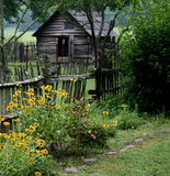 Old shed and black eye susans Royalty Free Stock Photo