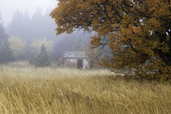 Old shed in fog. stock images