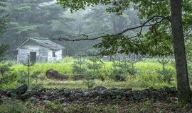 Old shed in forest Stock Image