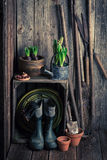 Old shed with garden tools and fresh plants Royalty Free Stock Photos