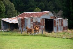 Old Shed & Horses Royalty Free Stock Images