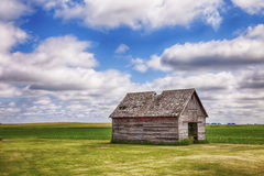 Old Shed In Iowa Field. An old shed or similar kind of outbuilding on a farm in central Iowa stands before a field of early corn royalty free stock image