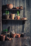 Old shed with old clay pots and gardening tools. Closeup of old shed with old clay pots and gardening tools Stock Images