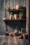 An old shed with old clay pots and gardening tools Stock Images
