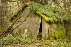 Old Shed in run-down condition. Old Shed in the forest over grown with moss and ferns royalty free stock images