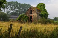 Old shed with tree  surrounded by vegetation royalty free stock photo
