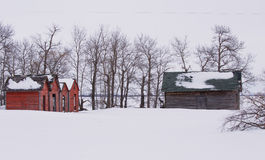 Old sheds in winter. Old red sheds in front of bare trees in winter Stock Photography