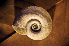 Old blank spiral shell Royalty Free Stock Photos