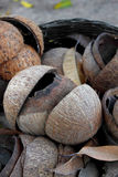 Old shell coconuts Royalty Free Stock Photos