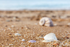 Old shell Rapana against the sea Stock Image